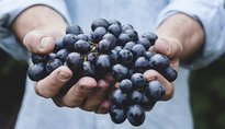 61° Festa dell'Uva a Verla di Giovo - Giovo